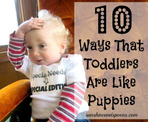 Ten Ways That Toddlers Are Like Puppies from Sunshine and Spoons.