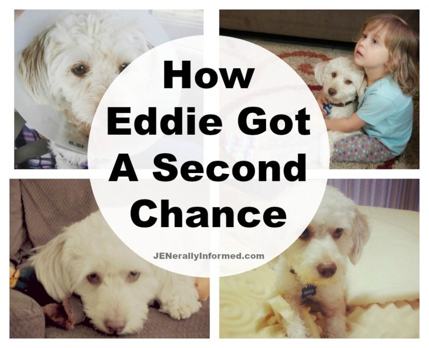 The story of Eddie. A real second chance rescue.