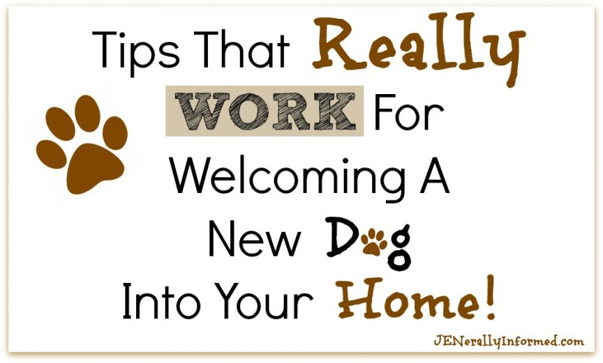 Welcoming a new dog into your home and life? Here are some tips that really work! #FeedDogsPurina #ad @Target