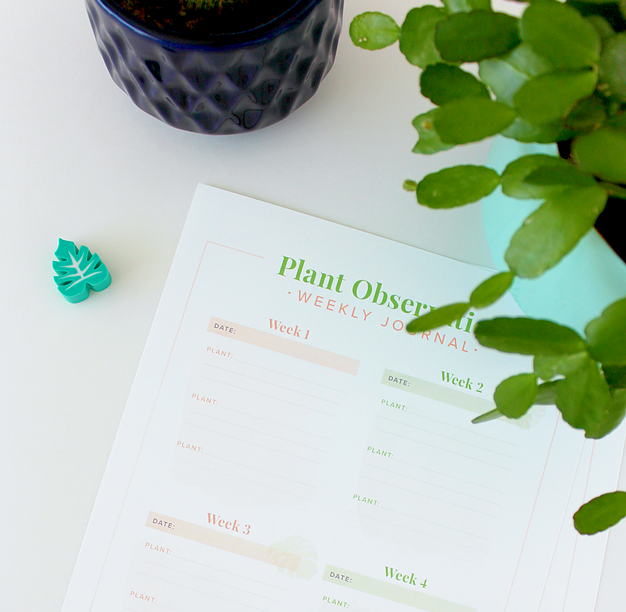 How to Care For Your House plants + Free Printables from White House Crafts.
