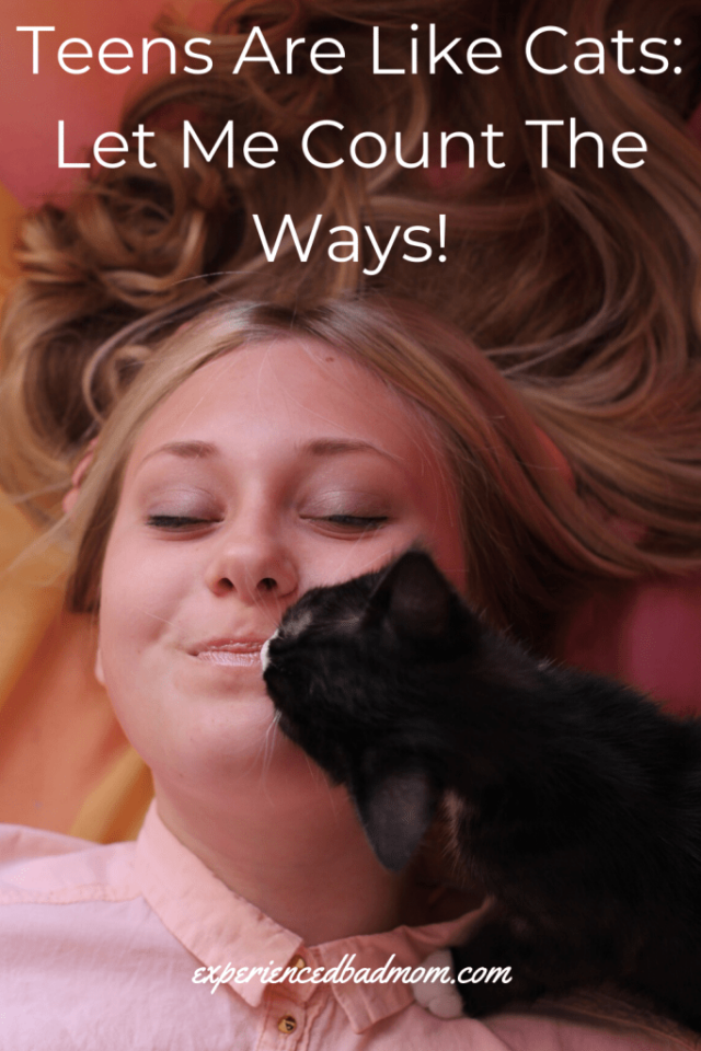 Teens Are Like Cats: Let Me Count The Ways from Experienced Bad Mom.